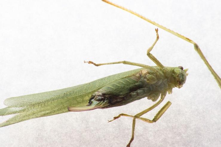 Broken Grasshopper